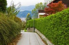 Дорога между изгородями Стоковое Изображение RF
