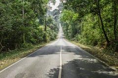 Дорога между зелеными деревьями Стоковые Фотографии RF