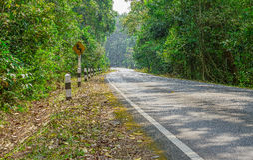 Дорога между зелеными деревьями Стоковые Изображения