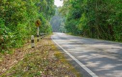 Дорога между зелеными деревьями Стоковые Фото