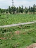 Дорога между зелеными полями Стоковое Изображение RF