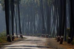 Дорога между пальмами Стоковые Изображения