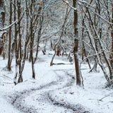 Дорога между Turea и Sardu в зиме Стоковые Фотографии RF