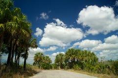 Дорога мертвого конца в болотистых низменностях Флориде Стоковые Фотографии RF
