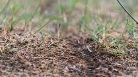Дорога муравья к anthill сток-видео