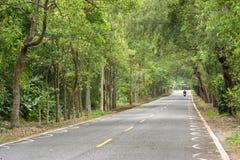 Дорога на лесе стоковая фотография rf