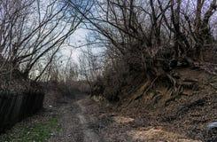 Дорога на пуще Стоковая Фотография RF