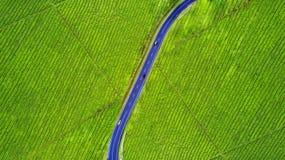 Дорога на плантации чая стоковое изображение