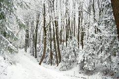 Дорога на snowbound лесе зимы в ландшафте зимы overcast красивом Стоковые Фотографии RF
