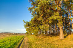Дорога около леса Стоковые Фотографии RF