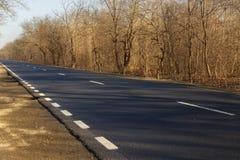 Дорога около леса Стоковые Изображения