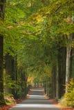 Дорога осени в голландском национальном парке Veluwe Стоковая Фотография RF