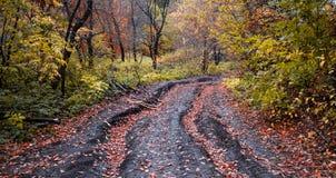 Дорога осени в лесе с красными листьями Стоковое Фото