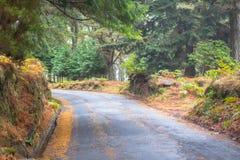 Дорога осени в лесе Стоковое Изображение