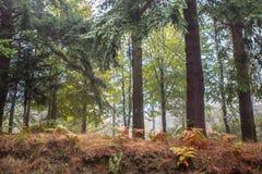 Дорога осени в лесе Стоковое фото RF