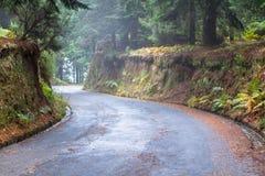Дорога осени в лесе Стоковое Фото