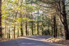 Дорога осени в лесе Стоковая Фотография RF