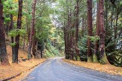 Дорога осени в лесе Стоковое Изображение RF