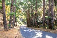 Дорога осени в лесе Стоковые Фото