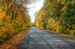 Дорога осени в дне стоковые фотографии rf