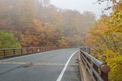 Дорога осени в Японии Стоковая Фотография