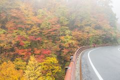 Дорога осени в Японии Стоковые Фото