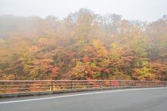 Дорога осени в Японии Стоковое фото RF