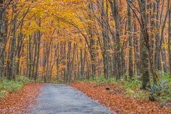 Дорога осени в Японии Стоковое Фото
