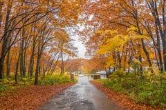 Дорога осени в Японии Стоковые Фотографии RF