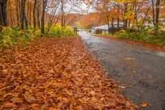 Дорога осени в Японии Стоковые Изображения RF