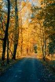 Дорога осени в forrest Стоковое Фото