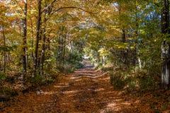 Дорога осени думала древесины стоковые фото