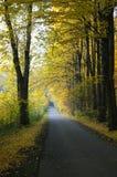 Дорога осени леса Стоковое фото RF