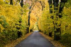 Дорога осени с деревьями Стоковое Изображение RF