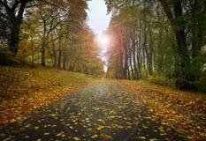 Дорога осени с листьями Стоковое Изображение