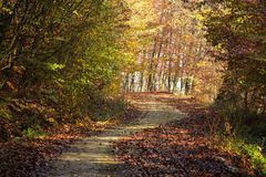 Дорога осени через лес с солнцем положительной стороны излучает Стоковое Фото