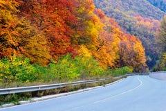 дорога осени Стоковая Фотография