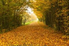 Дорога осени Стоковое Изображение RF