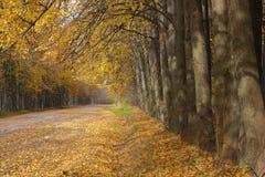 Дорога осени strewned с желтыми листьями Стоковое Изображение