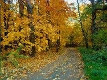 Дорога от лета в ландшафт леса осени стоковое фото
