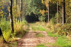 Дорога лошади леса, с дубами стоковое изображение rf