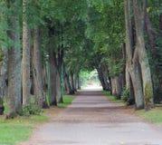 дорога парка к Стоковая Фотография