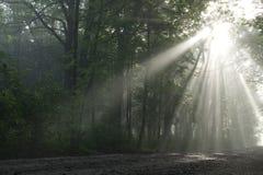 дорога парка к Стоковое фото RF