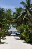 Дорога пляжа острова Мальдивов под ладонями Стоковые Изображения RF