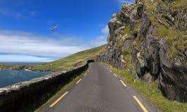 Дорога побережья одноколейного пути на голове Slea в полуострове Dingle, Ирландии Стоковое фото RF