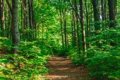 Дорога повсеместно в лес Стоковое Изображение RF