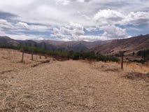 дорога покрытая с желтой травой стоковое изображение rf