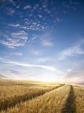 дорога поля Стоковое Фото