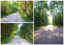 Дорога под защитой ветвей дерева Стоковое Изображение