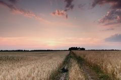 Дорога поля в заходе солнца Стоковая Фотография
